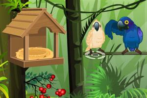 《森林养鹦鹉》游戏画面1
