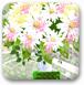 可爱的花束