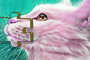 《可爱小猫咪的拼图》游戏画面1