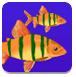 双人版大鱼难道是幻术吃小鱼