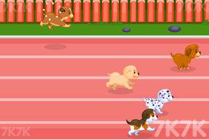 《狗狗障碍赛跑》游戏画面2