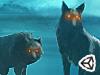 丛林有只狼