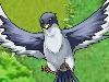 飞鸟的复仇