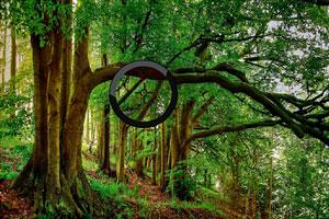 灌木森林找字母