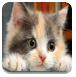 小猫咪拼图