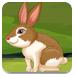 兔子逃离村庄